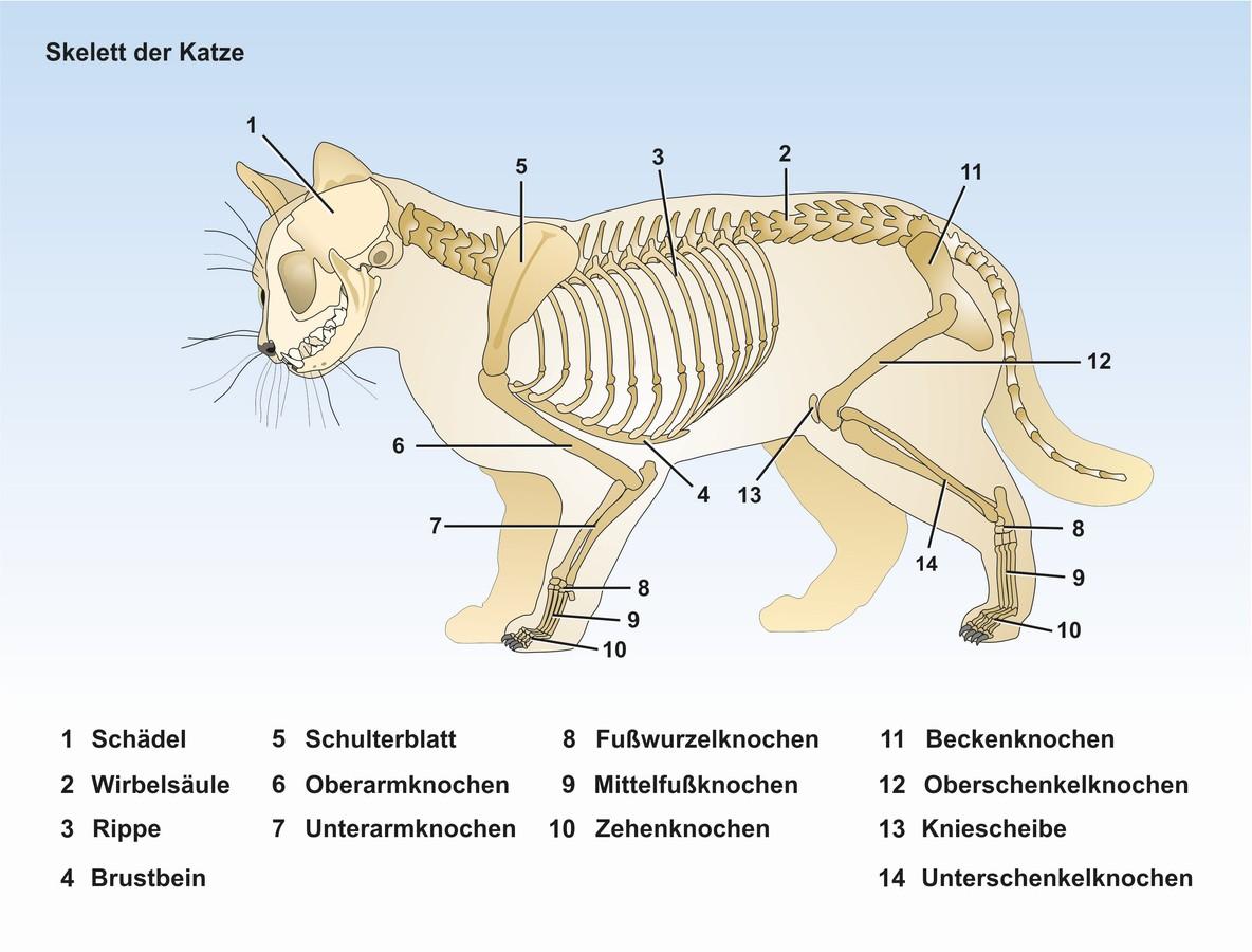 Haus-und Nutztiere: Unterrichtssoftware Die Katze