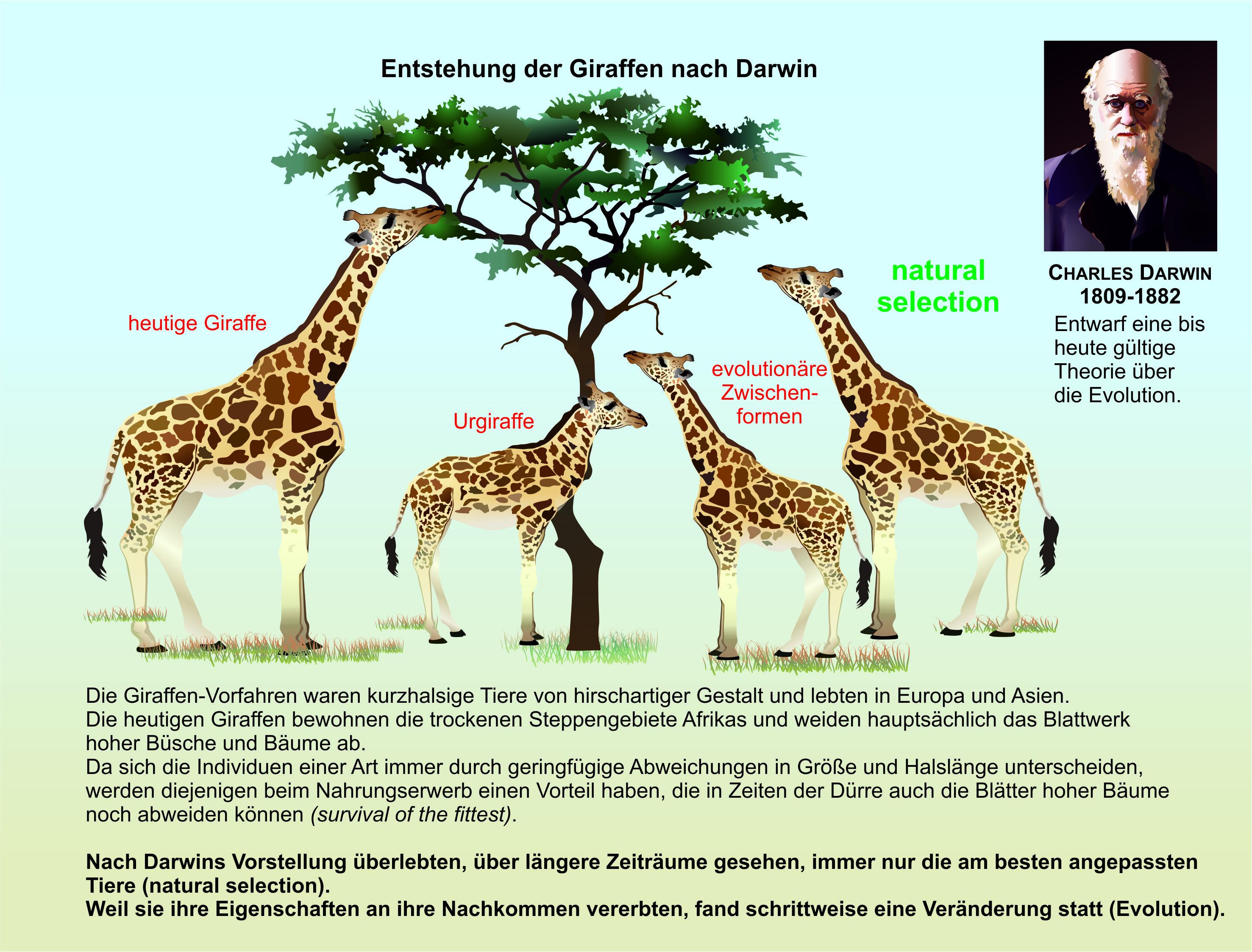 Darwin Evolutionstheorie